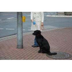 Entrenador de animales ultrasónico + Ahuyentador de animales + Alarma de pánico