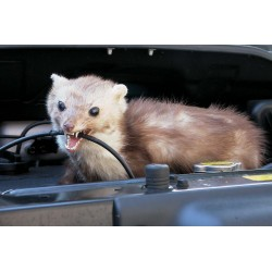Ahuyentador de roedores móvil
